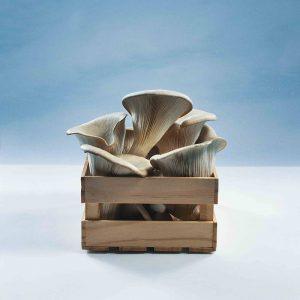 Pilze in der Kiste
